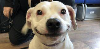 cãozinho com um sorriso lindo
