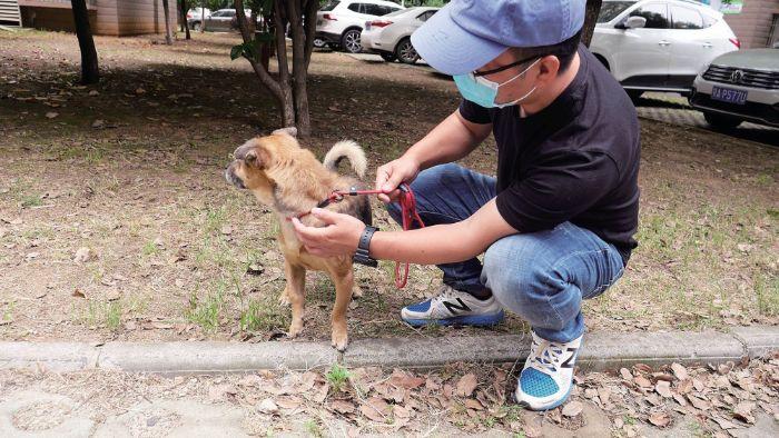 cão-resgatado