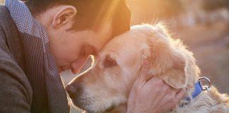 os-animais-de-estimacao-possuem-o-poder-de-curar-as-nossas-vidas
