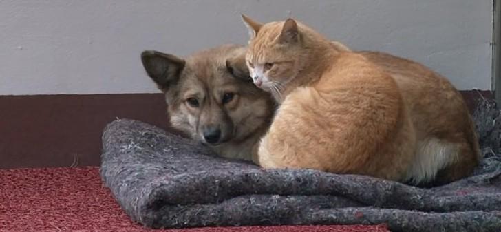 amigos-para-sempre-gato-e-cachorro-juntos
