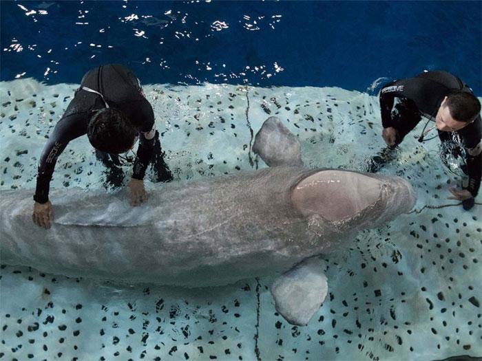 baleias-e-tratadores