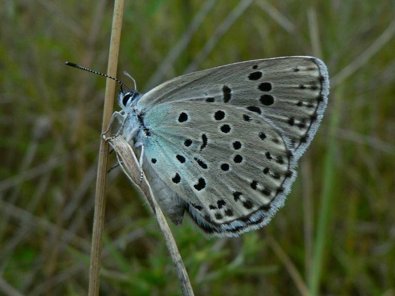 borboletas-azuis