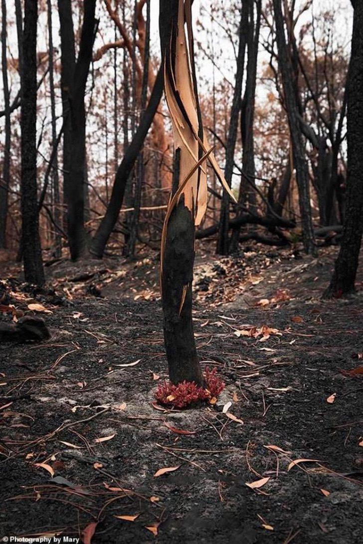 floresta-caracol-em-chamas
