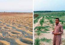 eles-plantaram-10-bilhoes-de-arvores-e-transformaram-um-deserto-em-uma-floresta-exuberante