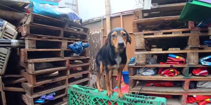 cachorro-abandonado-em-abrigo