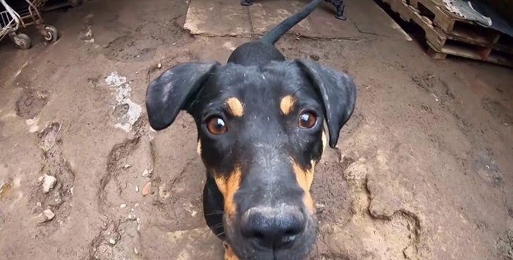 cachorro-abandonado