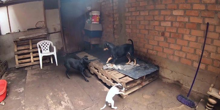 cachorros-resgatados