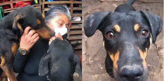 conheca-o-abrigo-que-da-futuro-a-cachorros-abandonados