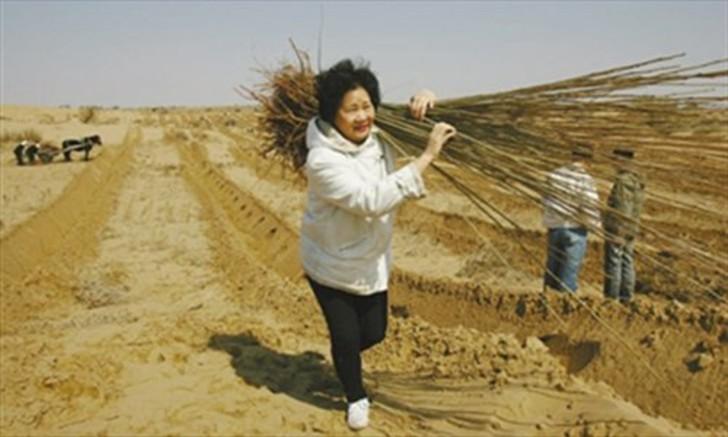 japonesa-trabalhando-na-plantação-da-floresta