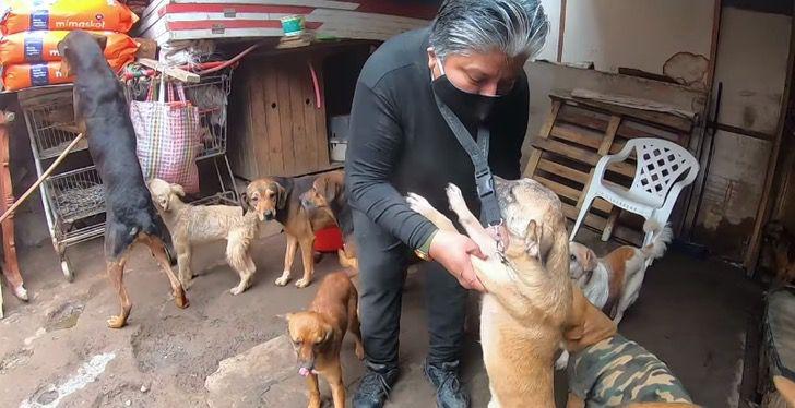 muitos-cachorros-ja-foram-resgatados-por-ela