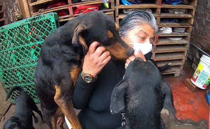 protetora-dos-animais-recolhe-cachorros-de-rua-em-sua-casa