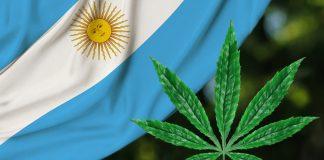 consciencia-argentina-legaliza-cultivo-de-maconha-para-uso-medicinal