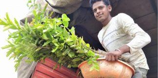 1-milhao-de-arvores-frutiferas-plantadas-na-india-este-ano-para-combater-a-fome