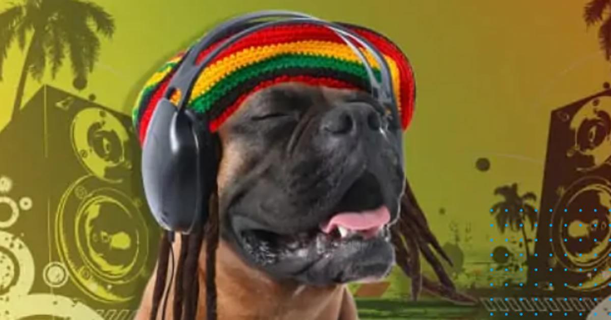 estudo-música-caes