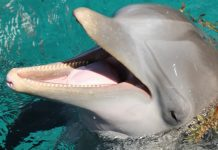 golfinhos-tem-tracos-de-personalidade-semelhantes-aos-humanos-diz-estudo