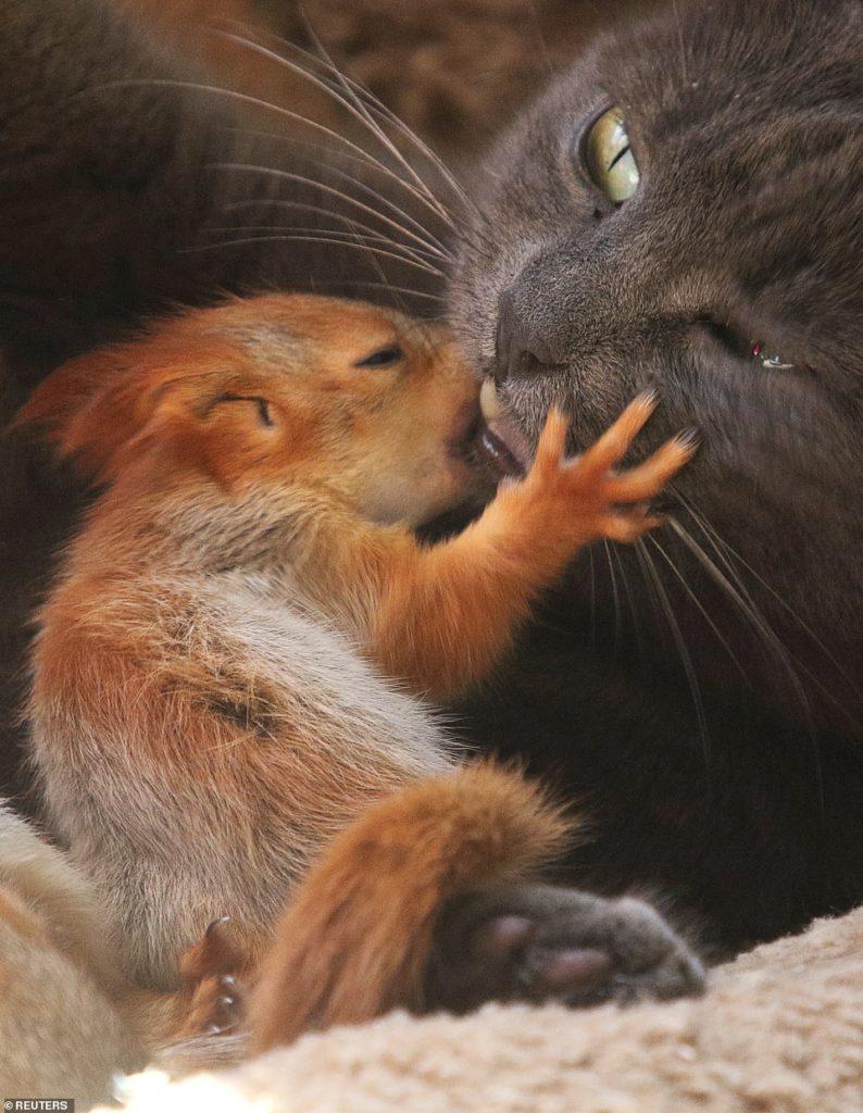 gatinha-amorosa