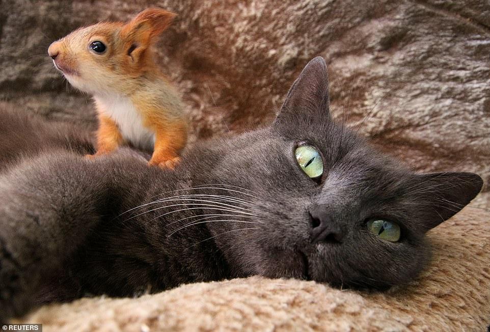 gata-cuida-de-esquilos-como-filhos