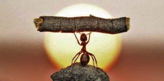 a-fabula-da-formiga-trabalhadora-que-foi-demitida-por-estar-desmotivada