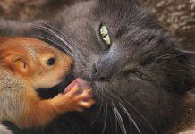 gata-abre-seu-coracao-e-adota-quatro-esquilos-orfaos