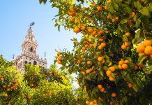 laranjas-podres-serao-usadas-para-gerar-energia-em-sevilha