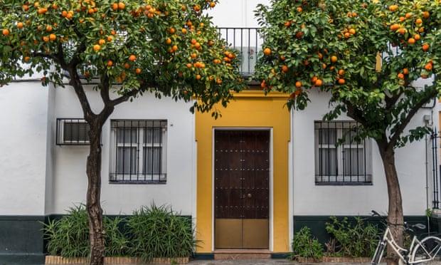 laranjeiras-em-frente-das-casas
