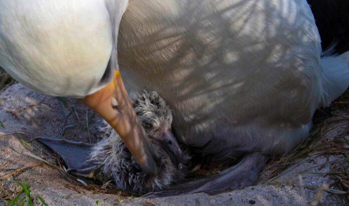 pássaro-e-seu-filhote